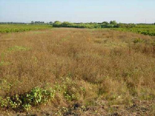 Agricoltura, ok a regolamento per 'Banca della Terra d'Abruzzo'