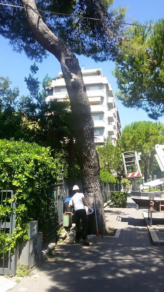 Pescara: il Comune taglia anche gli alberi salvati ad aprile