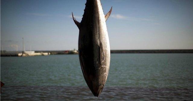 Pescara, sequestrato tonno rosso all'intero di una barca