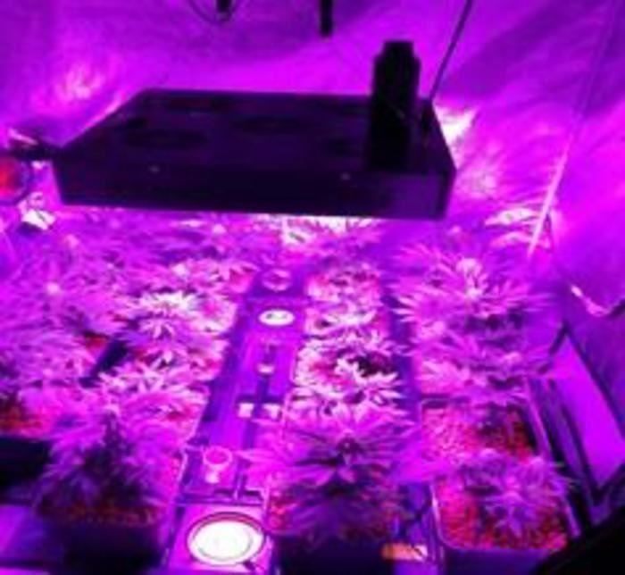 Vasto, trasforma mansarda in serra di marijuana: arrestato