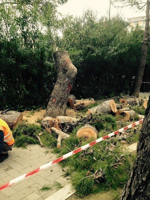 Pescara, taglio alberi: il Tar dà ragione al Comune