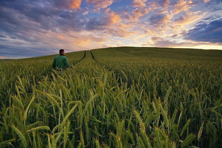 Agricoltura Abruzzo, bandi da 7 milioni per il biologico