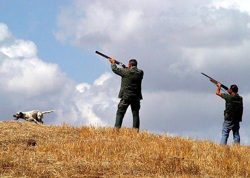 Abruzzo, Regione annuncia la proroga per la caccia al colombaccio