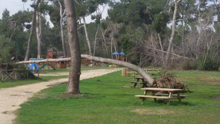 Pescara, 50 gli alberi abbattuti dal maltempo: parchi ancora chiusi