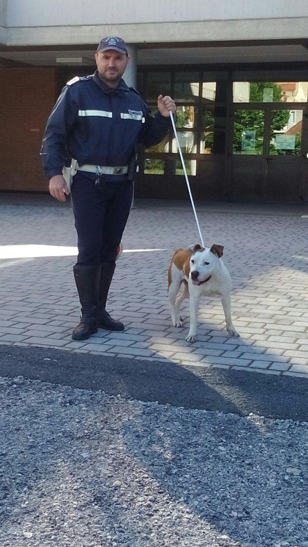 Pescara, pitbull scappa da casa e si rifugia a scuola