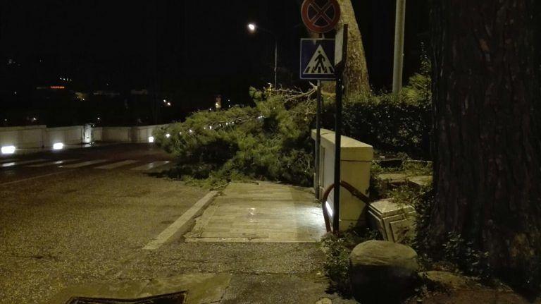 Teramo, albero a terra vicino il tribunale FOTO