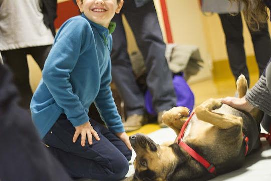 Giulianova, laboratorio di tesi sulla Pet-Therapy alla Piccola Opera Charitas