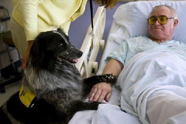 Ospedale L'Aquila, prende sempre più piede la pet therapy