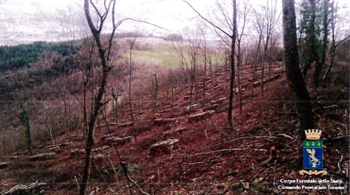 Civitella, taglialegna irregolari scoperti dalla Forestale
