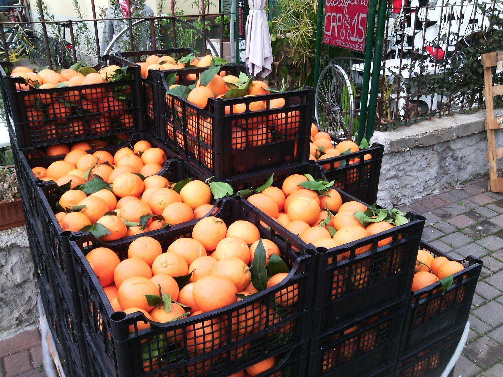 Pescara, le arance di solidarietà contro mafia e caporalato