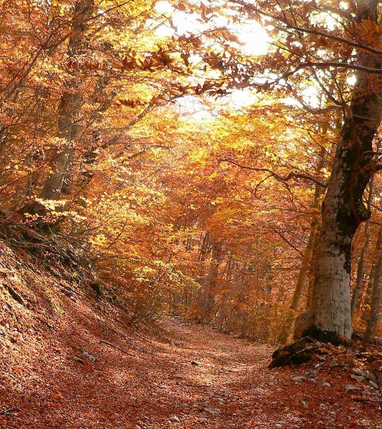 Santuario San Gabriele, raduno dei direttori dei parchi d'Europa  per un turismo sostenibile
