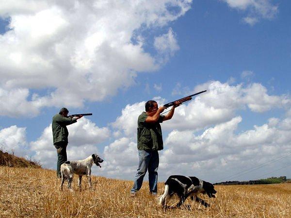 Calendario venatorio: ancora coas sulle preaperture e utilizzo dei cani