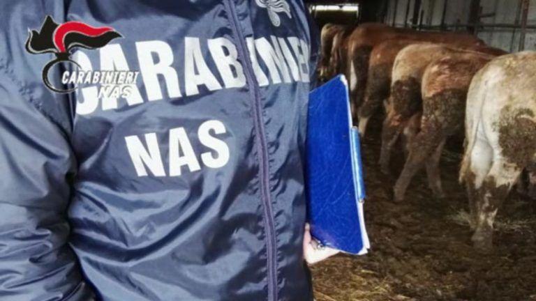 San Giovanni Teatino, cavalli dopati per le gare: due nei guai