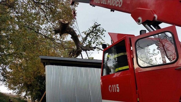 Atri, pompieri al lavoro per gli alberi caduti con il forte vento FOTO