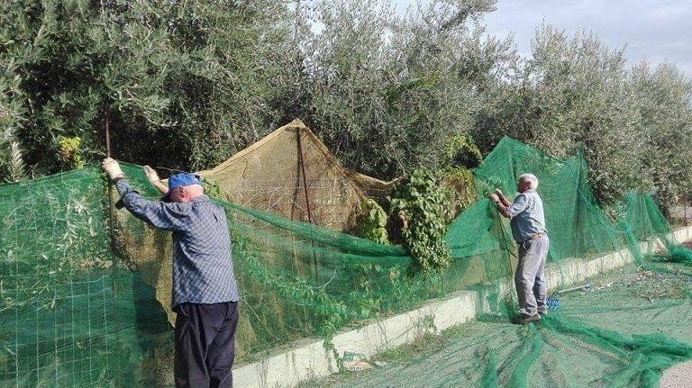 Pianella, muore mentre raccoglie le olive