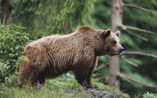 Regione Abruzzo, approvato programma conservazione orso bruno marsicano