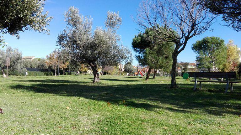 Giulianova, raccolta olive in aree pubbliche: ECCO COME FARE