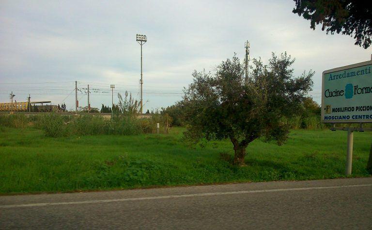 Tortoreto, il Comune raccoglie le olive e dona l'olio alle famiglie in difficoltà