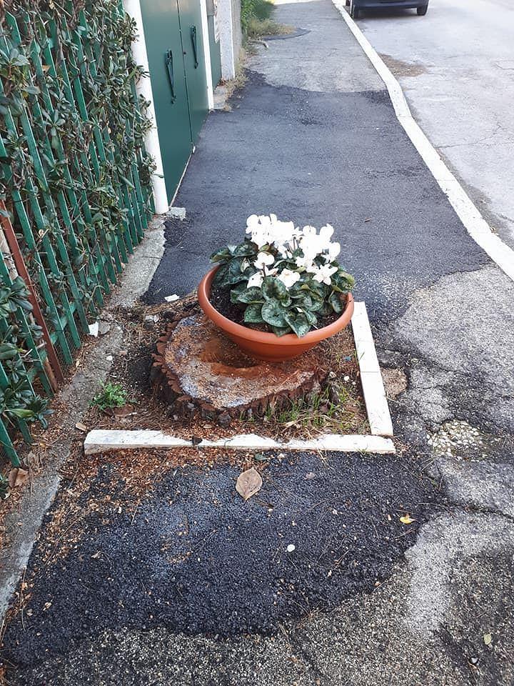 Silvi, pini danneggiati. Conalpa chiede regolamento del verde urbano FOTO
