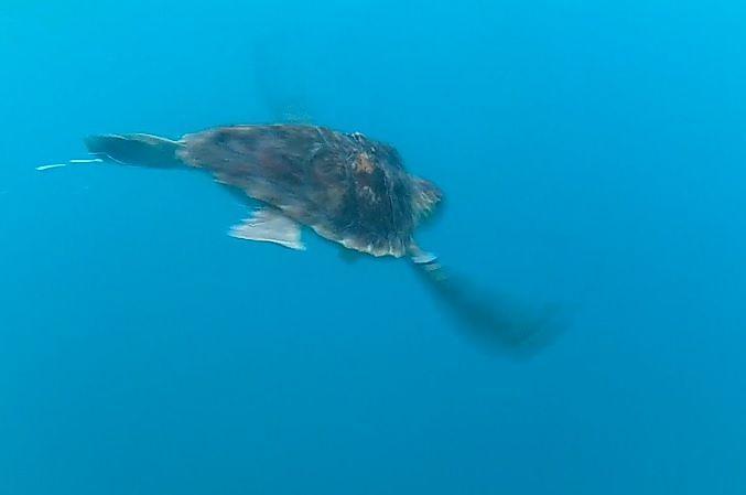 Pescara, ancora una tartaruga catturata e poi tratta in salvo dai pescatori