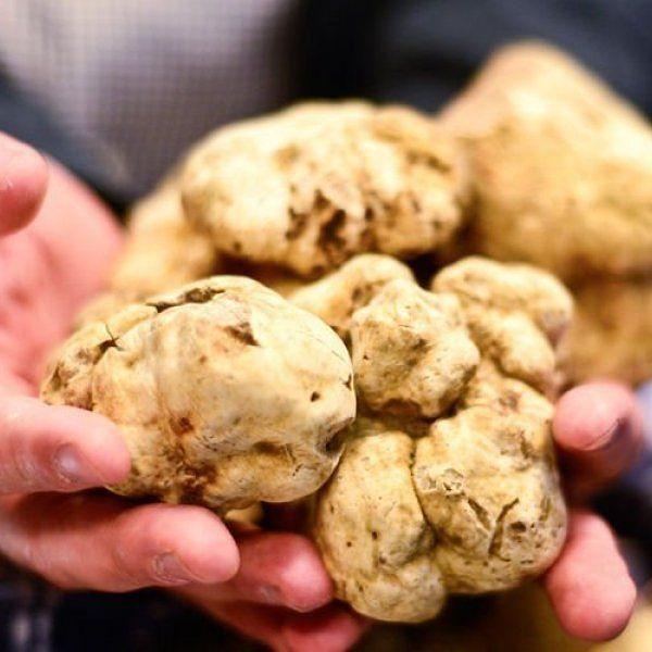 Tartufo bianco: in Abruzzo calo di produzione dell'80%. Ora vale 350 euro l'etto