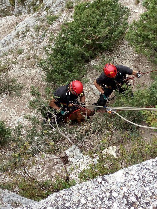 Majella, cane cade in un dirupo: salvato dai vigili del fuoco