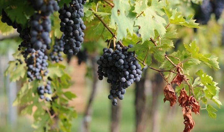 Abruzzo, nuovo bando per investimenti nelle aziende vitivinicole
