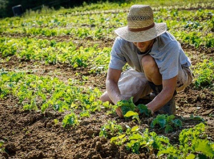 Lavoratori agricoli regionali: protesta venerdì a Teramo