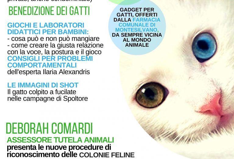 Montesilvano, la Festa del gatto al Parco della Libertà