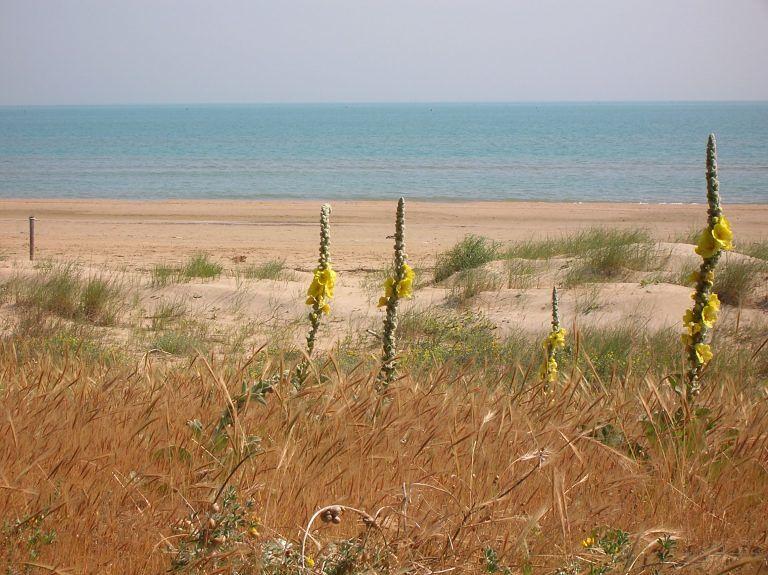 AMP Torre di Cerrano: riprende il lavoro di protezione delle dune