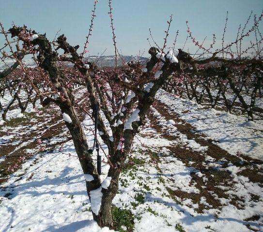 Nevicate, il Comune di San Salvo ha chiesto lo stato di calamità naturale