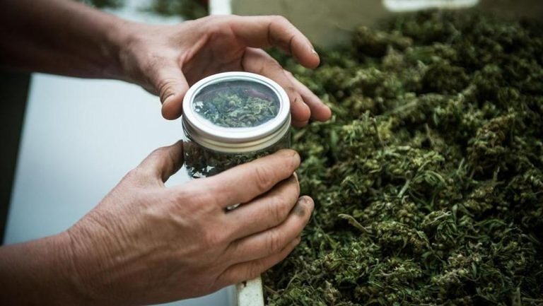 Chieti, cannabis light: denunciati i titolari di due rivendite