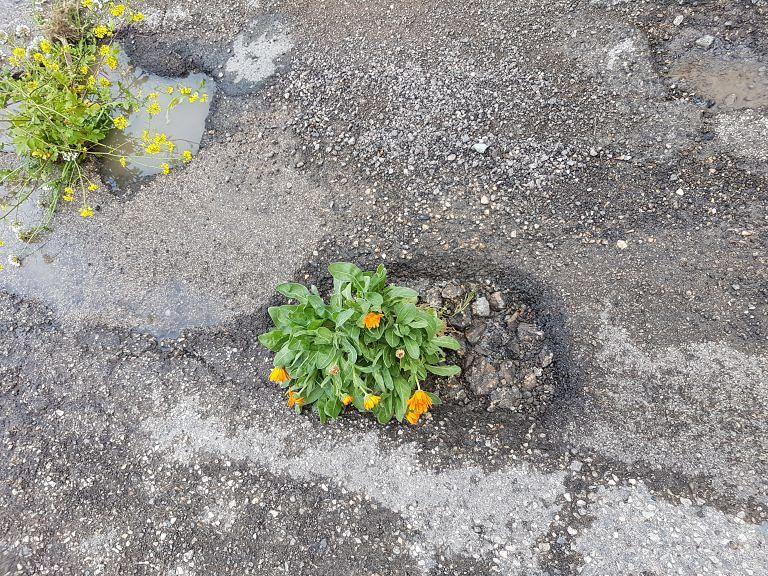 Fiori nelle buche della strada colabrodo a Poggio Morello. La protesta