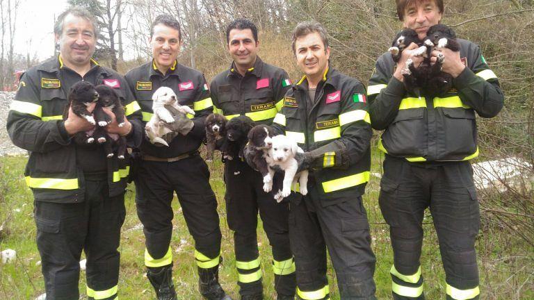 Teramo, cani partoriti nel canale di scolo: i vigili del fuoco salvano la cucciolata FOTO VIDEO