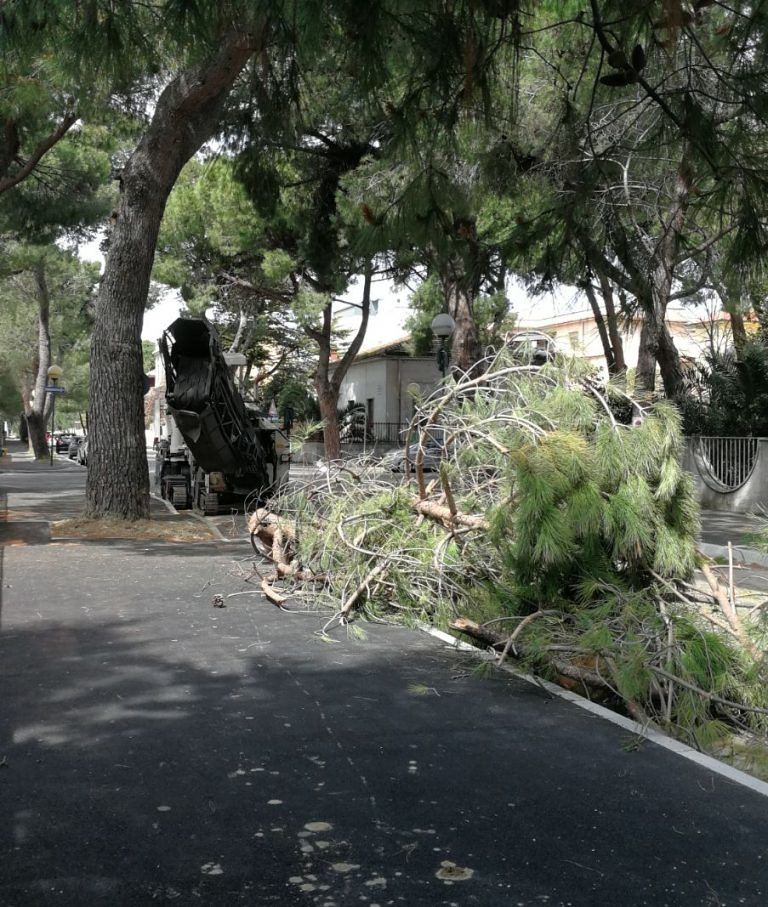 """Pescara, """"Strage di alberi in via De Cecco e Scarfoglio"""" FOTO"""