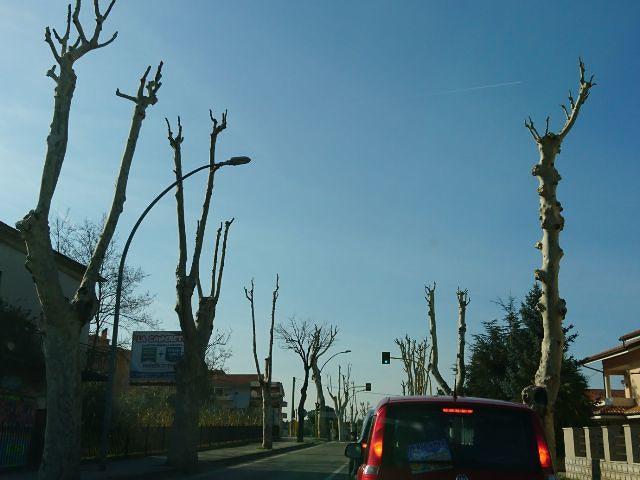 Conalpa: 'Gli alberi urlanti e massacrati a Francavilla al Mare'