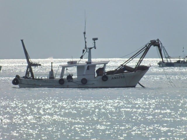 Alba-Martinsicuro: sospesa la pesca delle vongole per la presenza di due virus. Il provvedimento