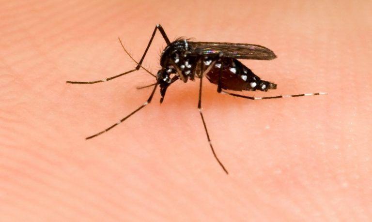 Roseto, al via la disinfestazione delle zanzare