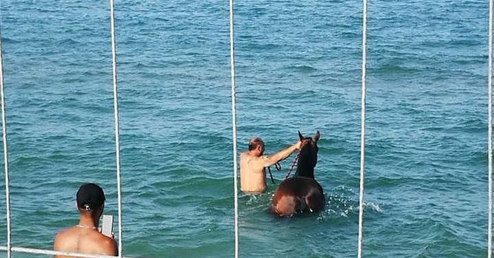 Villa Rosa, il cavallo fa il bagno in mare