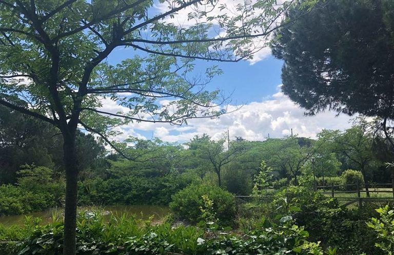 Montesilvano, il Parco della Libertà in gestione al Dog Village