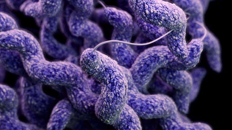 Pescara, intossicazioni nelle mense: il batterio non si trova