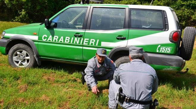 Bolognano, trappole per catturare animali selvatici: denunciato bracconiere