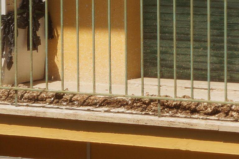 """Pescara, degrado in via Nora: """"Chili di escrementi, ratti e infiltrazioni nelle case Ater"""" FOTO"""