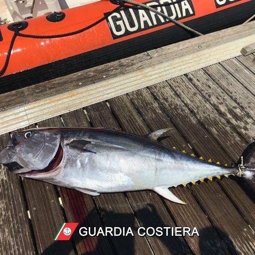 Giulianova, pesca di frodo: sequestrato tonno rosso e pescatore multato per oltre 2mila euro
