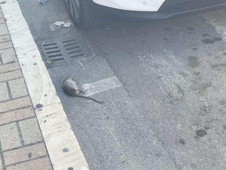 Pescara, città sporca e non igienica: è emergenza ratti