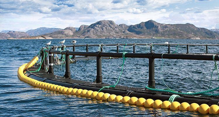 Sushin, progetto Ager acquacoltura a Superquark. Tra i sostenitori, anche la Fondazione Tercas