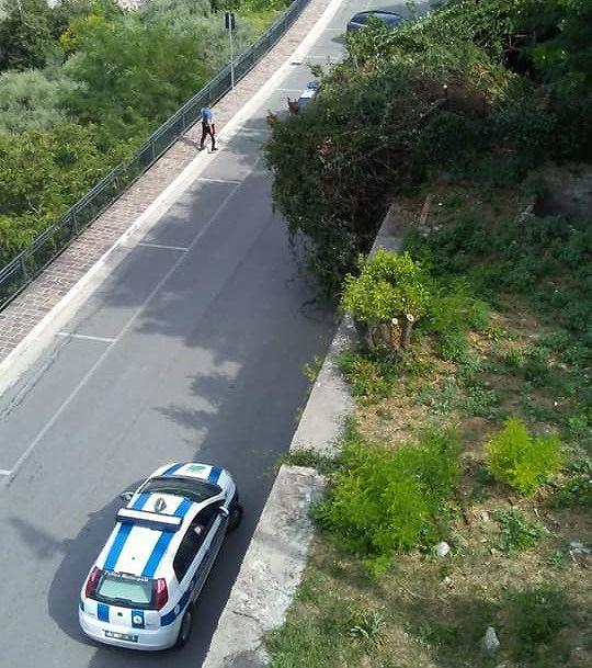 Giulianova, albero cade su via Piave