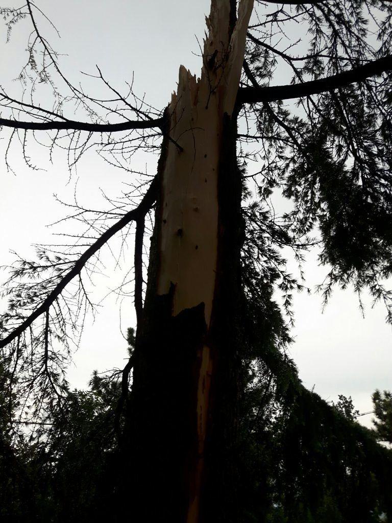 Torricella Sicura, fulmine colpisce pino in un cortile FOTO