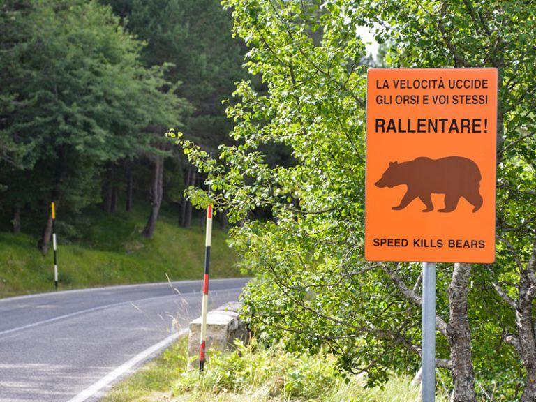 Rischio incidenti con orso bruno: il progetto di sicurezza nelle aree del parco