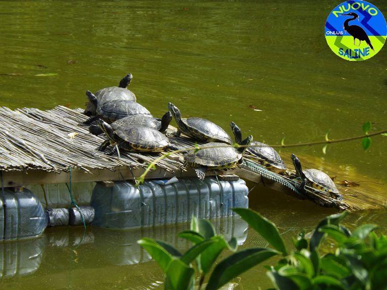 Montesilvano, tracima il laghetto del parco della Libertà: tartarughe a rischio FOTO